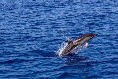 De Pula: Cruzeiro ao Pôr do Sol c/ Observação de Golfinhos