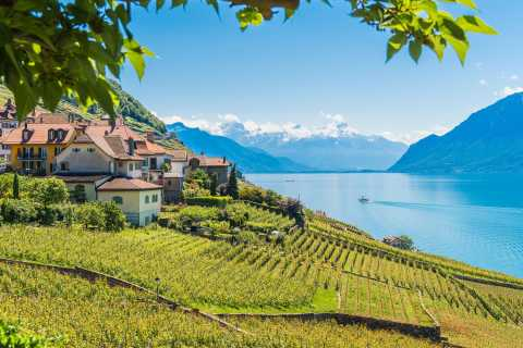 From Lausanne: Lavaux Panoramic Tour