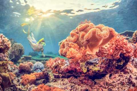 Oost-Bali: snorkeltocht naar Amed