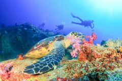 Bali: Mergulho para Iniciantes na Lagoa Azul de Padangbai