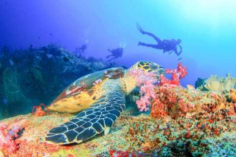 Bali: duiken voor beginners in de Padangbai Blue Lagoon