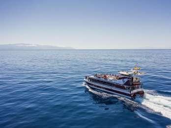 Teneriffa: Wal- & Delfin-Tour mit Unterwasser-Beobachtung