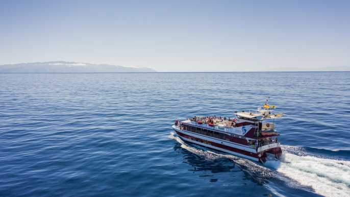 Tenerife: Whale and Dolphin Tour with Underwater Views