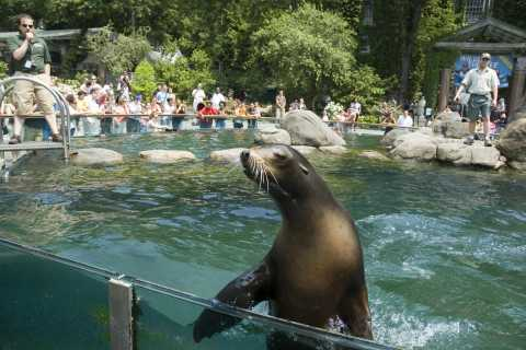 New York City: Central Park Zoo and Sightseeing Walking Tour