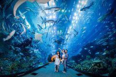 Ingresso de 1 Dia Aquário de Dubai e Zoológico Subaquático