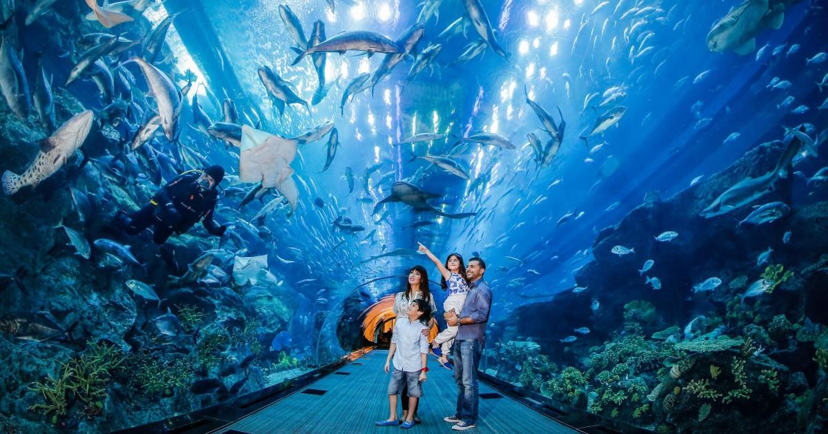 Dubai Aquarium and Underwater Zoo Day Ticket - Dubai, United Arab ...