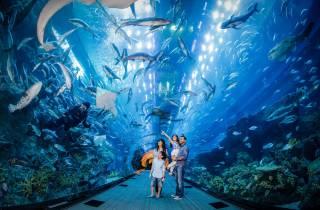 Dubai Aquarium & Unterwasserzoo: Tagesticket