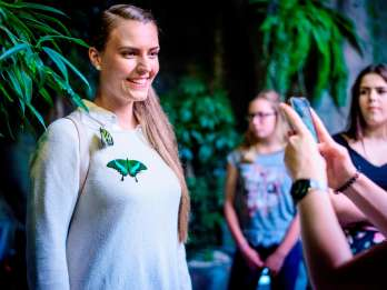Schmetterlingshaus Papilonia Prag: Tagesticket