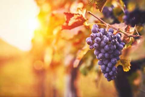 Los Gatos: 4 Winery Tour of Santa Cruz Mountains with Lunch