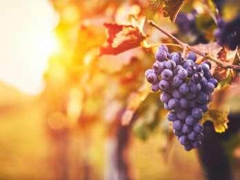 Los Gatos: 4 Weintour durch die Santa Cruz Mountains mit Mittagessen