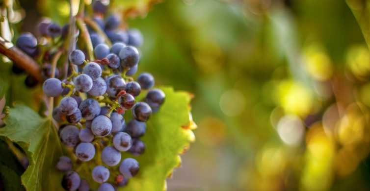 From Los Gatos: Coast To Mountain Wineries Tour with Lunch