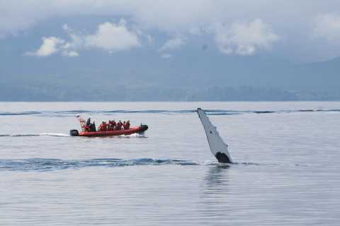 Port Renfrew: Whale and Wildlife Watching Cruise