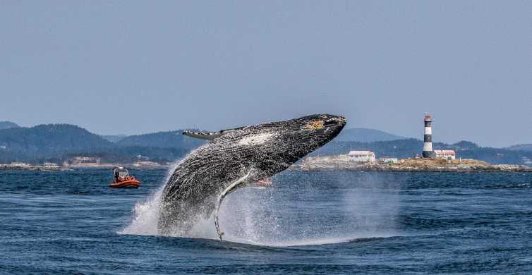 Victoria: 3-Hour Zodiac Whale-Watching Tour