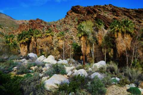 Palm Springs: Indian Canyons Hiking Tour by Jeep