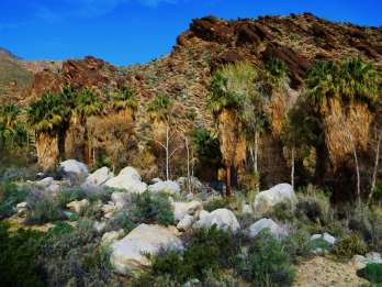 Palm Springs: Allrad- und Wandertour zu den Indian Canyons