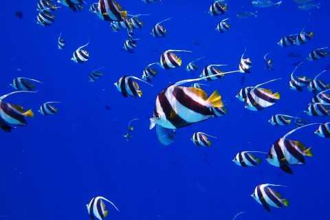 Kendwa: Introductory Scuba Dive on Tumbatu Island