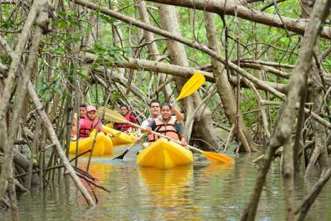 Quepos: Mangrove Kayaking Tour