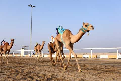 Al-Shahaniya: Sheikh Faisal Museum & Camel Track Tour