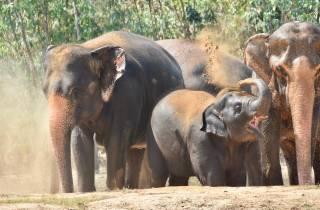 Ab Bangkok: Auffangstation für Wildtiere und Elefanten
