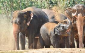 From Bangkok: Wildlife Rescue and Elephant Rescue Tour