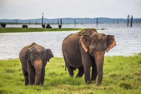 1-Day Tour of Both Yala and Udawalawe National Parks