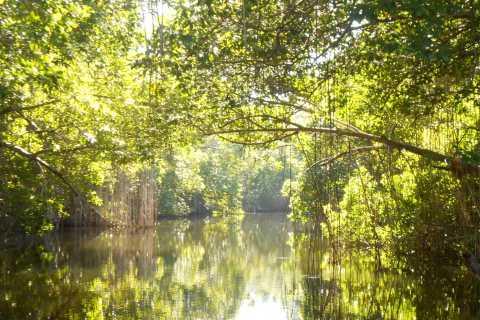 Jamaica: Black River Safari, YS Falls, and Appleton Rum Tour