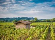Aus Brescia: Gastronomie und Weinerlebnis in Franciacorta