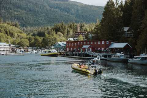 Telegraph Cove: 3-Hour Whale Watching Tour in a Zodiac Boat