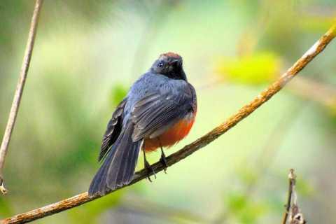 Antuiga: Finca el Pilar Birdwatching Experience