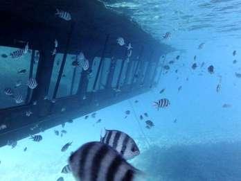 Rotes Meer: Tour im Halbtauchboot
