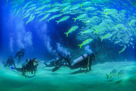 Los Cabos 3-Hour Introductory Scuba Diving Adventure