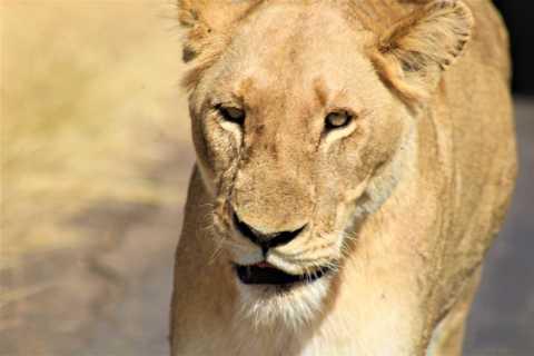 Kruger National Park Full-Day Safari