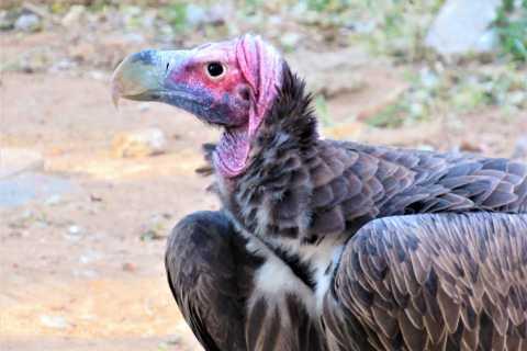 Hazyview: Endangered Wildlife Rehabilitation Tour