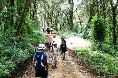 Moshi: Guided Kilimanjaro Day Tour
