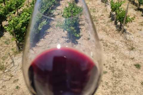 Kreta: Private Winery Tour in Heraklion Wine Provence