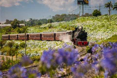 From Gramado and Canela: Maria Fumaça Train & Winery Tour