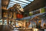 Natural History Museum of Los Angeles County Tickets