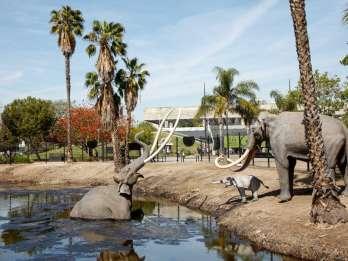 Los Angeles: La Brea Tar Pits Museum