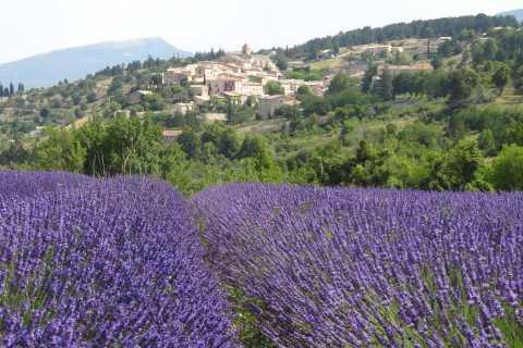Luberon: tour mattutino tra i campi di lavanda da Avignone