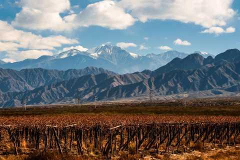 Mendoza: Excursão de 1 Dia a Vinícolas c/ Almoço de 3 Pratos