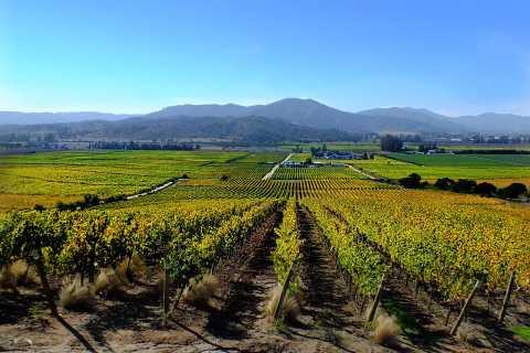 Casablanca Valley: 4 Vineyards with 1 or 2 Wine Tastings