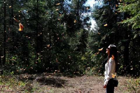 Da cidade do México: excursão de borboleta monarca de 7 dias