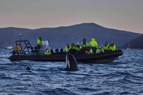Tromso: Whale Watching in Magic Skjervoy