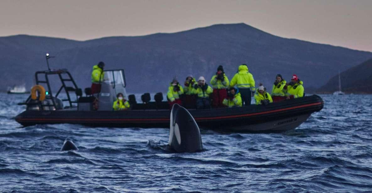 Ab Tromsø: Walbeobachtungs-Tour im magischen Skjervøy