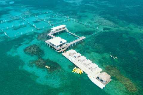 Punta Cana: Reef Explorer