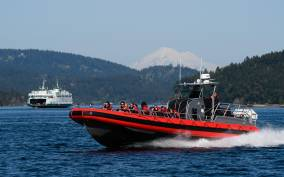 San Juan Islands: 3-Hour Whale Watching Excursion