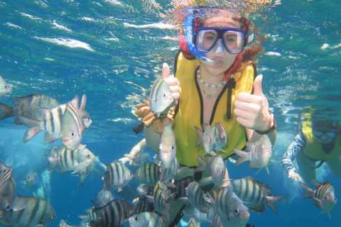 Cozumel: 3-Reef Snorkeling from Playa del Carmen