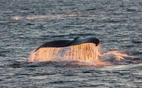 Tromsø: Fjord Cruise & Whale Safari Boat Tour