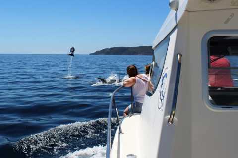 From Sesimbra: Arrábida Dolphin Watching Boat Tour