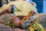Aquarium of the Bay: Skip-the-Line Tickets